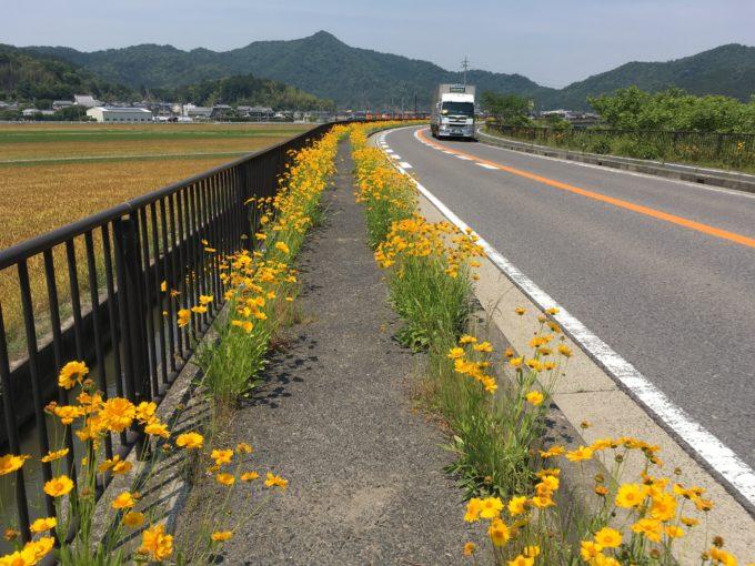 黄色い花の路