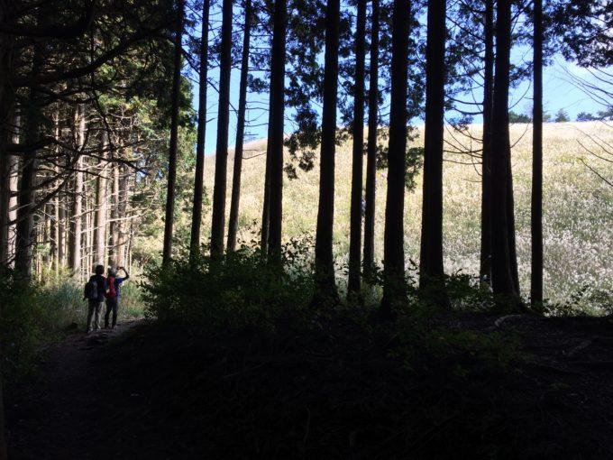 薄の丘の入り口