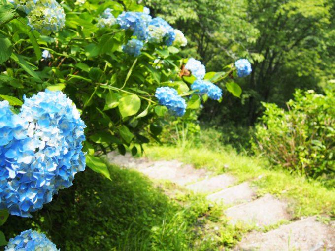 紫陽花の坂道