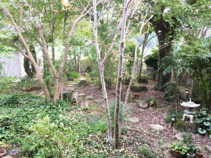 緑の広がる庭