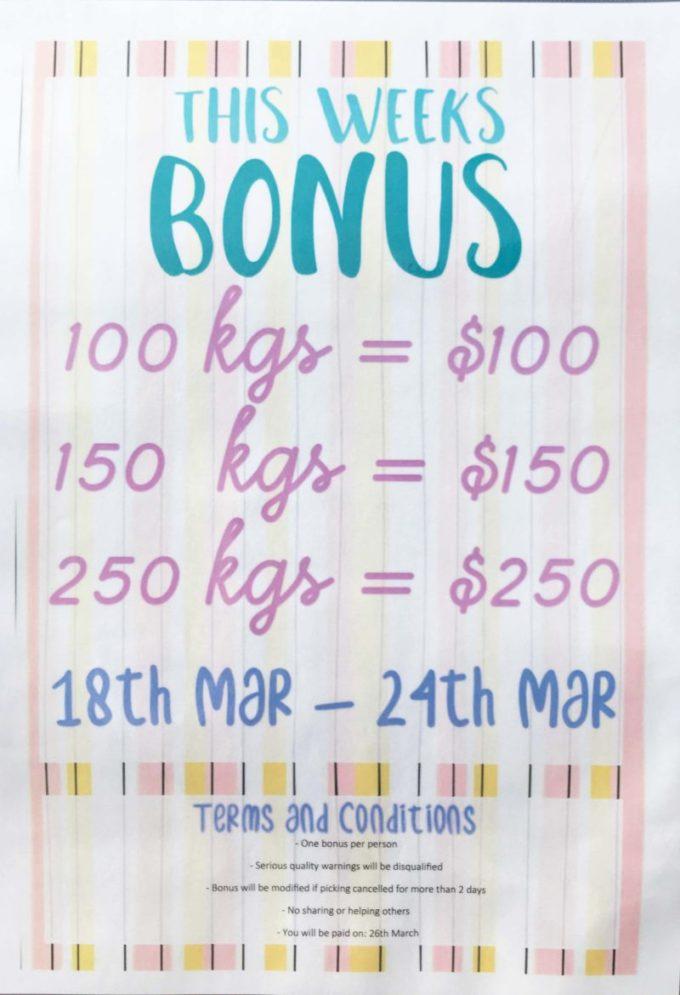 Bonus Week