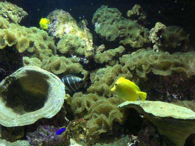 熱帯魚を見るとニモを探してしまう。