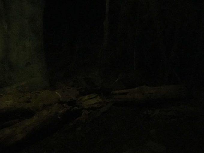 暗闇の中を動くキウィ