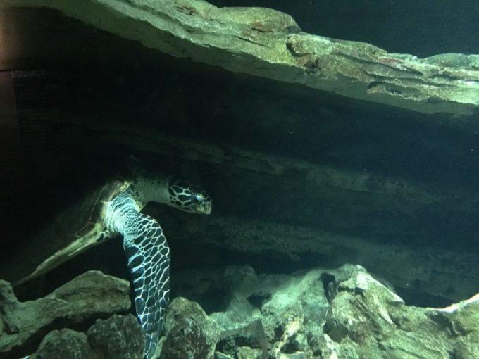 昼下がりのウミガメ